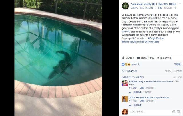 【ガクブル】家のプールで巨大ワニが泳いでいた! 知らずに飛び込んでいたら命はなかったかも……