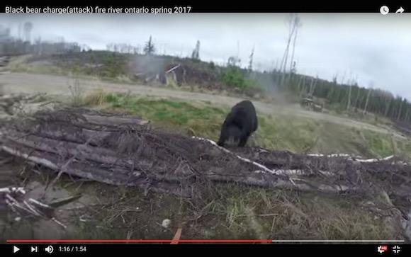 【奇跡の生還】クマに襲われるハンターの視点映像がマジで怖い
