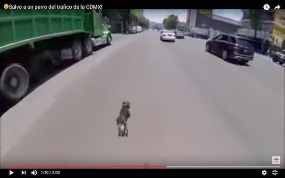 【奇跡の生還】ワンコが道路の真ん中を爆走して危機一髪! 次々と車を避けまくる動画がマジ恐怖