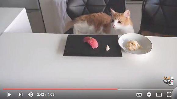 手作りで『ねこ寿司』を作る日本人YouTuberの動画が海外で大人気! ニャンコは「特製寿司とキャットフード」のどちらを選ぶのか