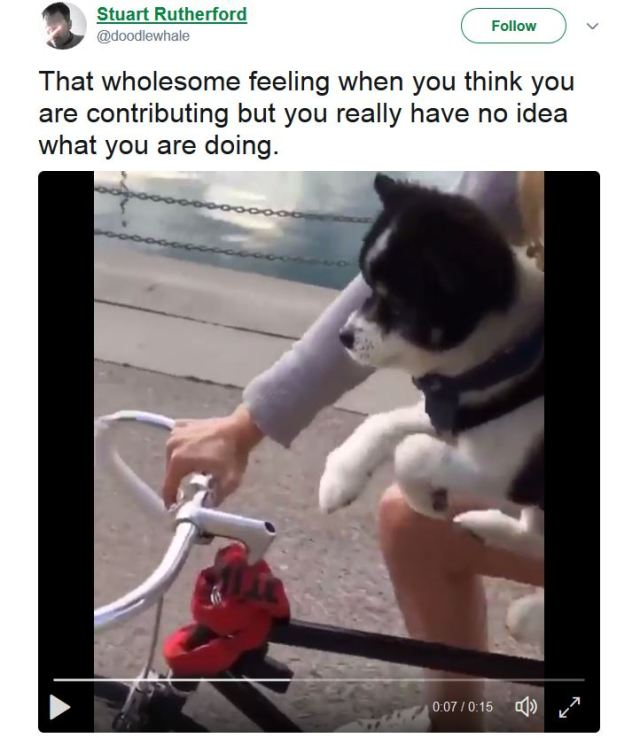 【萌え動画】自分が自転車を漕いでいる気でいるワンコがキュン死レベルに可愛い!