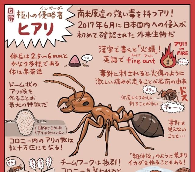 【必見】話題の「ヒアリ」をわかりやすく解説したイラストがこちらです