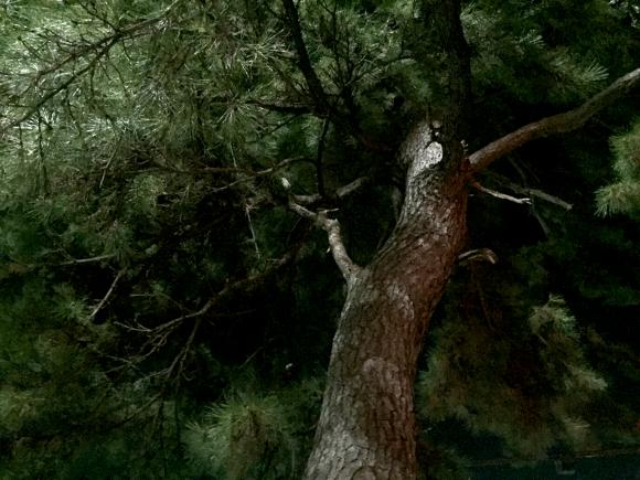 【幽霊の日】15年前、北海道「支笏湖」で体験したちょっと怖い話