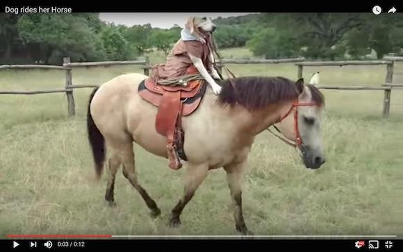 これぞ犬馬一体! 巧みに馬を乗りこなすワンコがお見事!!