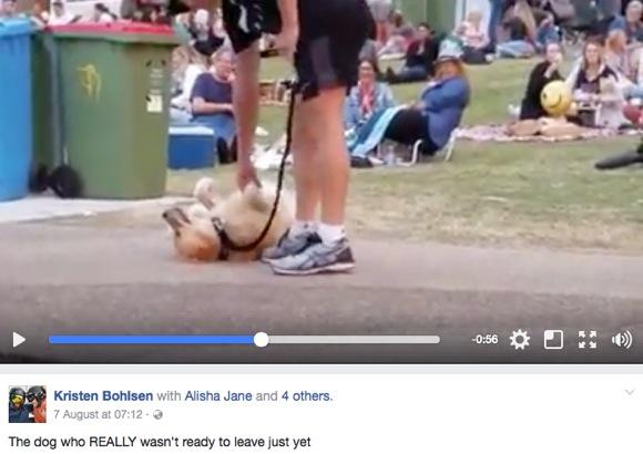 【激闘動画】絶対に動きたくない犬 vs 飼い主