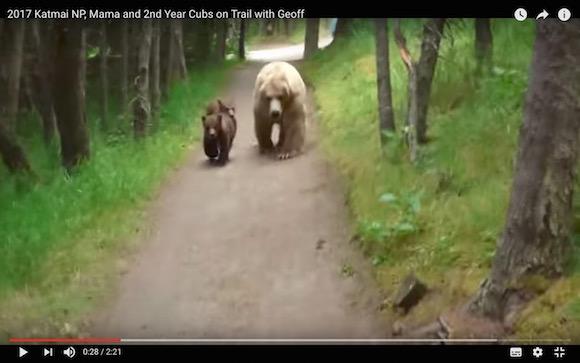 クマに遭遇して「やるべきこと」をやった男性が九死に一生! 絶体絶命のピンチを切り抜ける