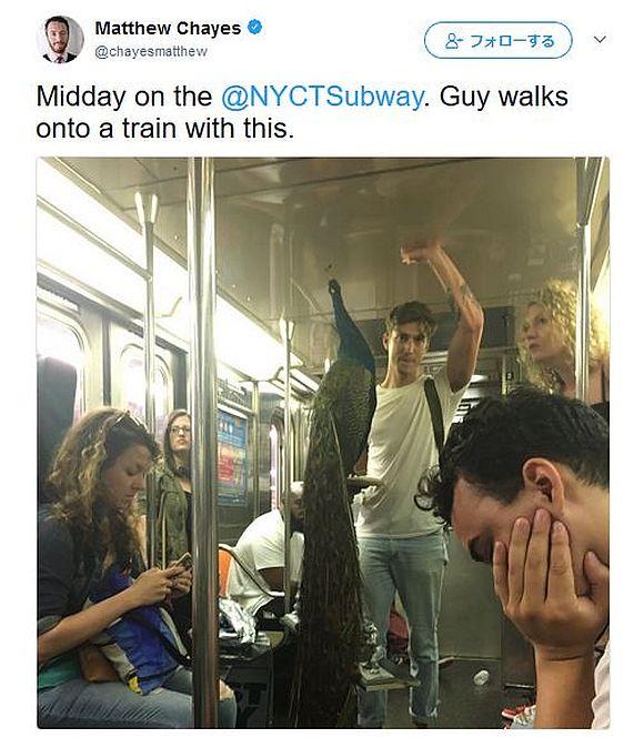 【マジかよ】ニューヨークの地下鉄にクジャクを連れた男性が乗車