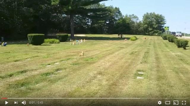死んだ犬が生き返った!? 墓の上に飼い主を待つ犬らしき姿が現れたっていう動画がマジで不思議