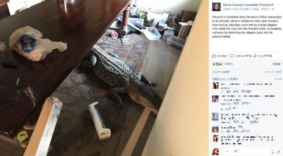 【米テキサス】ハリケーン後に家に帰った住民がリビングで巨大ワニを発見 / 危険な野生動物と遭遇するケースが増加