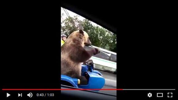 【おそロシア】クマがサイドカーに乗ってラッパを吹くっていう動画がこちらです
