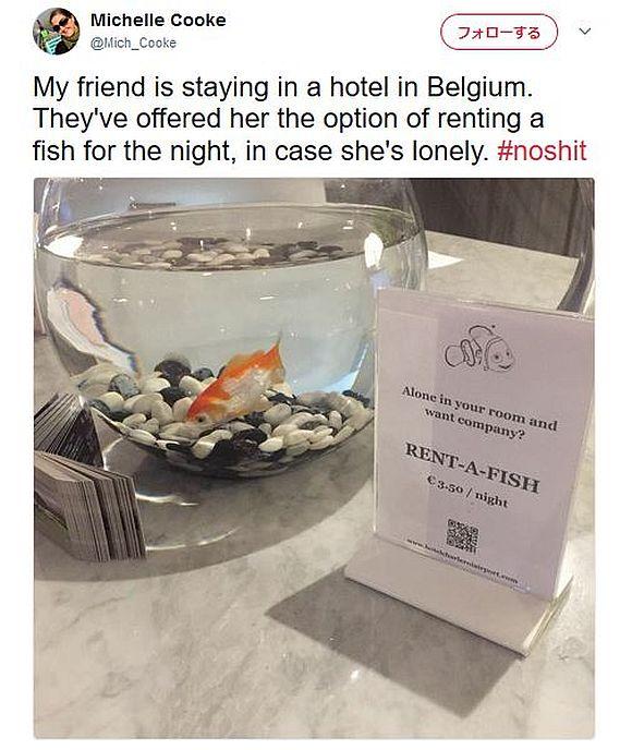 【マジか】ボッチで寂しい宿泊客が「金魚をレンタルできるホテル」が海外にあるらしい