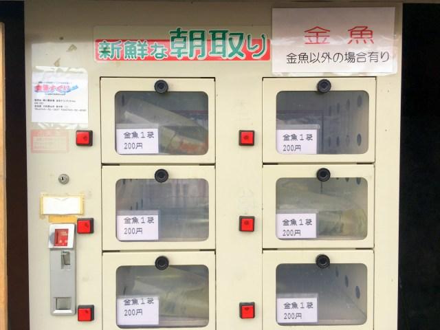 自動販売機で売られている『金魚』を買ってみた!