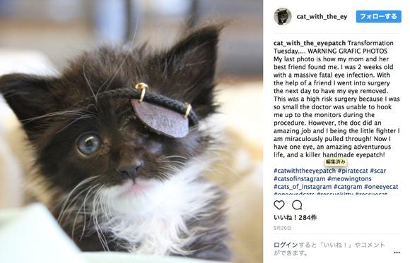 「眼帯を付けた子ネコ」がカワイすぎ! 片目を失いながら九死に一生を得た後 Instagram デビューにゃ!!