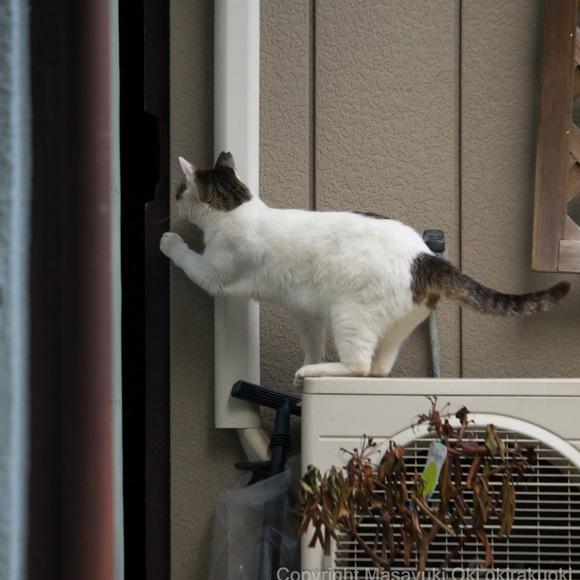 """""""必死すぎる猫"""" を撮らせたら右に出る者ナシ! 売り切れ続出、話題の写真集『必死すぎるネコ』の写真家・沖昌之さんに話を聞いてみた"""