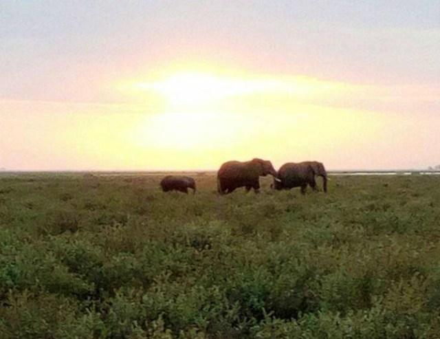 【マサイ通信】第104回:マサイの「#イマソラ」写真集 / 今日も夕日が綺麗ですね