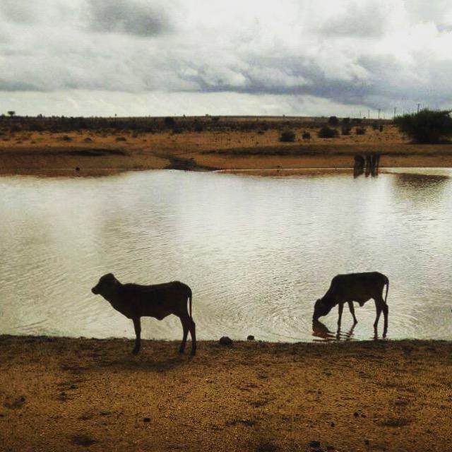 【マサイ通信】第110回:久しぶりに雨が降ってマサイ族は大喜び! 知られざる「干ばつ」の被害とは