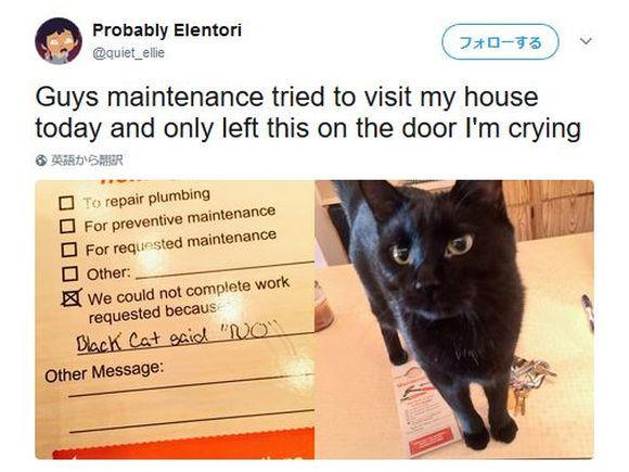 黒猫が「NO」と言ったから仕事できませんでした! ありえない言い訳をした業者が現る
