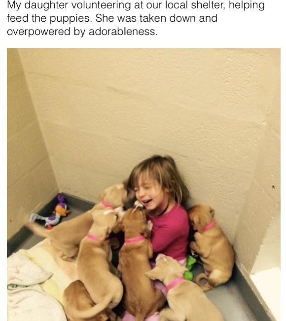 【最強の笑顔】子犬まみれになった少女の笑顔が可愛くてまさに天使! 幸せいっぱいの姿に「この写真に救われた」などの声