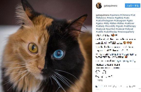 【神秘の猫】左右の顔が全然違う! 顔半分が2色に分かれて両目のカラーも違うニャンコが神がかり的な美しさ