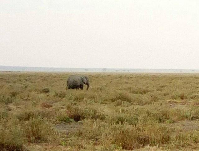 【油断禁物】意外と知らない「野良ゾウ」の被害 / マサイ通信:第115回