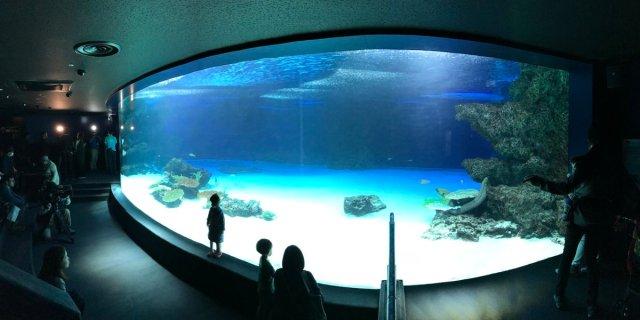 【怪奇】魚が大量死したサンシャイン水族館の巨大水槽を撮影した画像に「不思議な少女」が写り込む