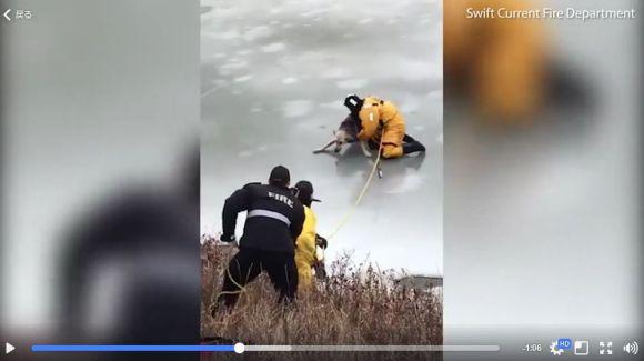 氷の池にハマったワンコを救出する動画にハラハラ…! 安心して氷の上を歩くには「厚さ10センチは必要」らしいぞ