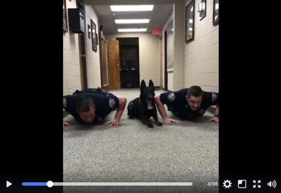 米警官と警察犬が一緒に腕立て伏せをする動画が激カワ! あまりの仲良しっぷりでネットの人気者に