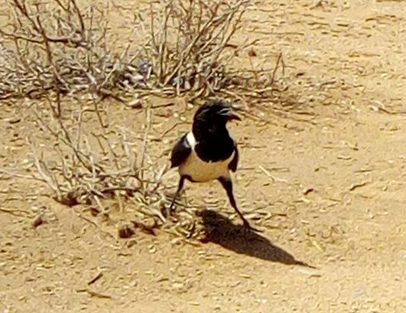 ケニアのサバンナにはこんな動物もいるんだよ! マサイ族の戦士が集めてきた野生動物写真集 / マサイ通信:第121回