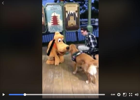 """ディズニーで """"大好きなプルート"""" に出会った介助犬がと〜っても嬉しそうで可愛いすぎ! 尻尾をブンブンふって大興奮の動画がこちらです"""