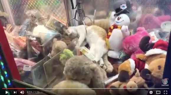 UFOキャッチャーの箱の中でリラックスしすぎなネコ様が激撮される