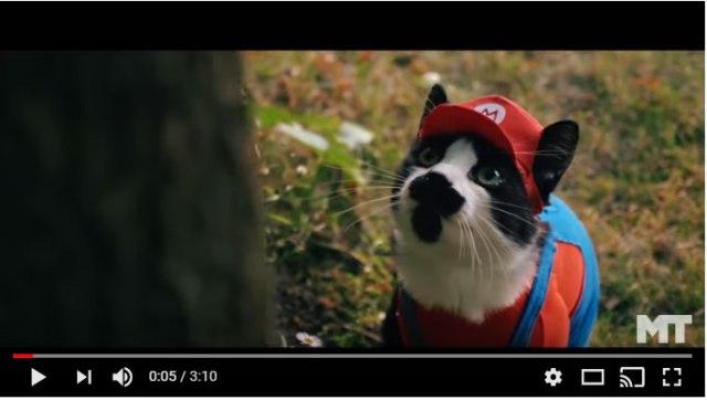 【ネコマリオ】もしマリオが本物の猫だったら? 『スーパーマリオ』を猫で実写化した動画が可愛すぎ! クッパもキュン死降伏するレベル