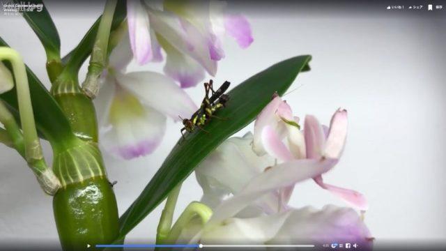 そこにいたのか…驚くべき擬態性能を持つ昆虫「ハナカマキリ」がこちらです