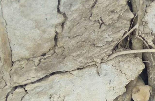 【画像クイズ】この中に「とある動物」が写っています。どこにいるでしょう? / マサイ通信:第142回