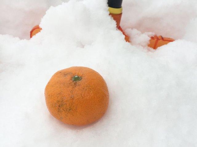 雪で「冷凍みかん」を作りたい / 死ぬほど雪があるのでミカンを埋めてみた! ドーナツやゼリーも埋めてみた