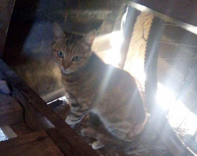 【本邦初公開】これが「マサイ猫」だ! マサイ通信:第143回