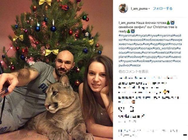 ロシアの動物園から保護されたピューマが「立派な家猫」に…獰猛なはずの肉食動物が見せるニャンコっぷりがカワええ~