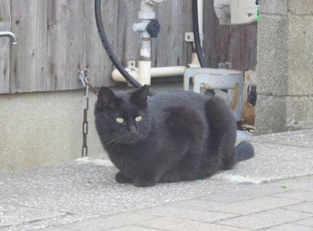【マジかよ】映画『ブラックパンサー』の影響で黒ネコの譲渡率がアップ!? 架空のヒーローが「現実のネコ」を救っていると話題に