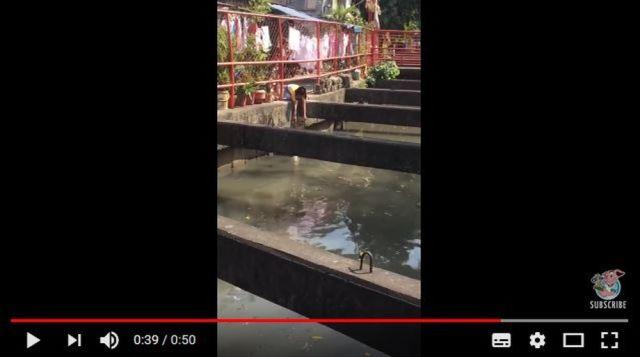 溺れそうなニャンコを助ける女性の動画に拍手喝采! とっさの機転の利かせ方が素晴らしい!!