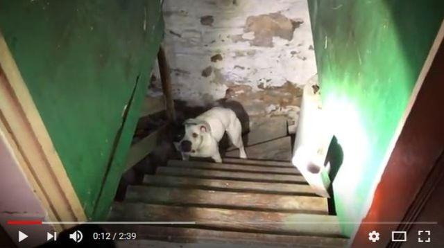 新居に引っ越したら地下室に犬がつながれたままだった → 助けられた時のリアクションが涙を誘う…