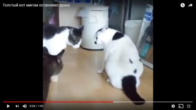 「ケンカの仲裁をする猫」の動画が可愛すぎる / 行動が予想外すぎて激怒してた猫もビックリ「ファ!?」って顔に