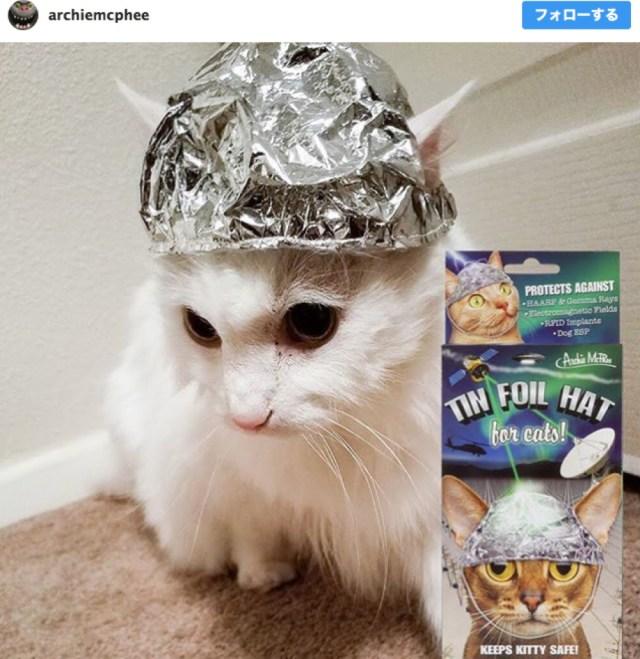 陰謀論を信じるネコ様むけに「アルミホイルで出来た帽子」が新発売! マインドコントロールからあなたのネコを守れ……!!