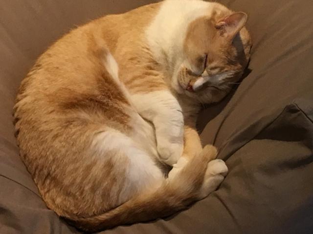 【すげえ】猫を飼っている人の99.7%が「幸せになった」という調査結果が発表される! さらに約半数が「健康になった」と回答