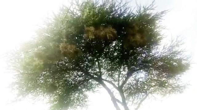 【動画あり】最近オレ、野鳥の鳴き声にハマってるんだ / マサイ通信:第155回