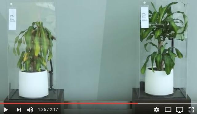 IKEA が『言葉のイジメに関する実験動画』を公開! 2つの植物に「意地悪な言葉」と「優しい言葉」を浴びせ続けた結果…… / ネット上では「噓っぽい」との声も