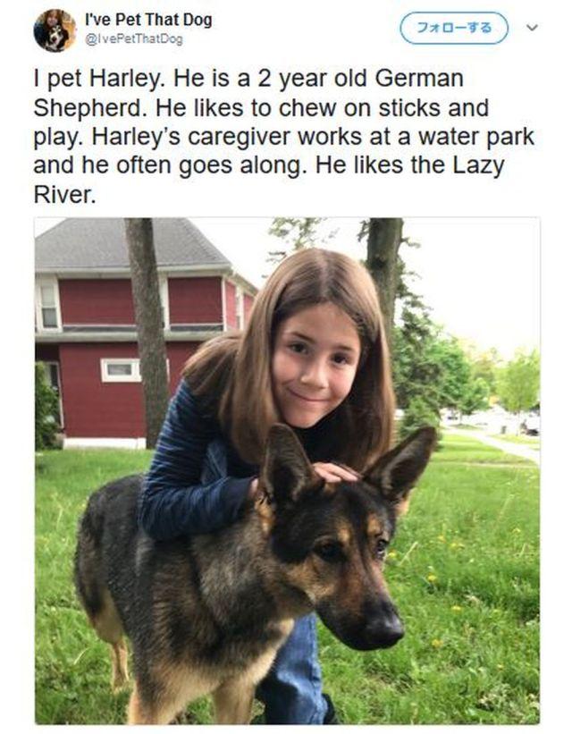 レビュー内容が可愛すぎ!「なでた犬」を評価する少年(9才)のTwitterアカウントが星5つレベルの人気で話題 / 紹介文に癒されちゃうぞ!!