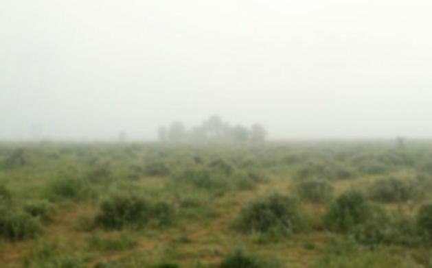 ケニアの最果てにアンコールワット!? 霧のサバンナってのも幻想的で悪くないぞ / 第168回