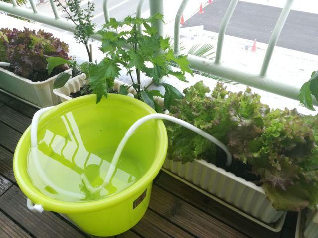 3週間留守にしても観葉植物は大丈夫!? 自動で水分供給してくれる商品「水やり楽だぞぅ」を使ったらこうなった!