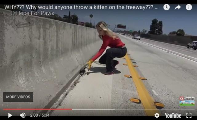 高速道路で子ネコ発見! 他の車を止めてレスキューする男女の動画に拍手喝采