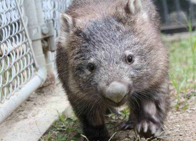 【珍獣】大阪池田市にある五月山動物園ではオーストラリアで人気のアイツに無料で会える!