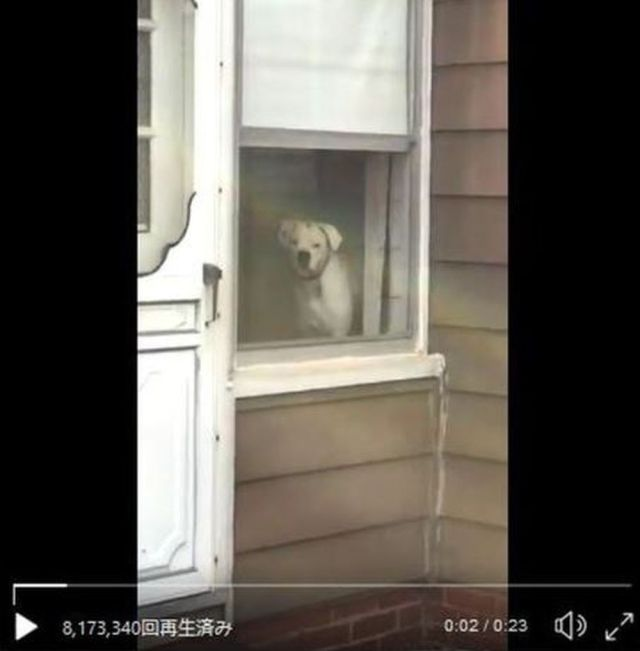ずっとこっち見てる…完全に「ストーカーな犬」がキモかわいくて大人気